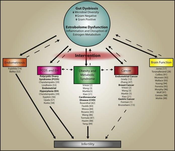 microbiota e fertilità
